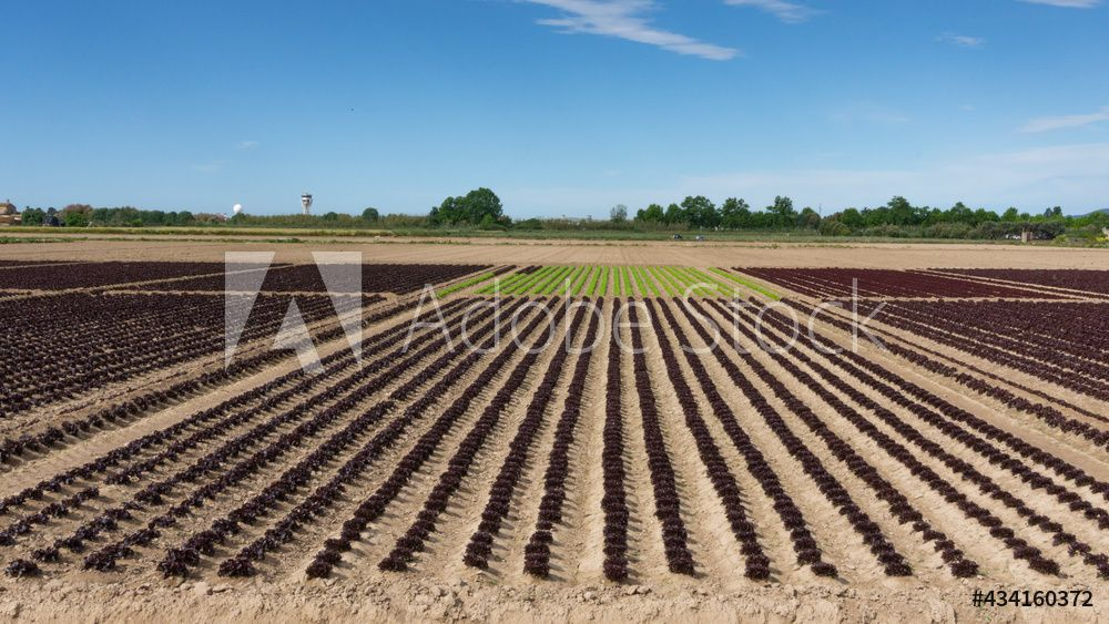 field dedicated to growing vegetables on a farm